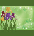 flowers iris and butterflies silhouettes vector image