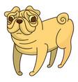 cute little pug dog vector image