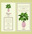 greeting card with alocasia planton vector image vector image