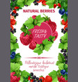 poster of fresh garden berries vector image vector image
