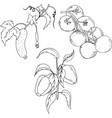 tomatoes peppers and cucumber branch vector image vector image