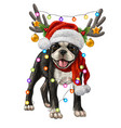 boston terrier with christmas decorations vector image