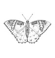 butterfly or wild moths insects female green duke vector image vector image
