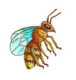 color striped bee flying insect animal side view vector image