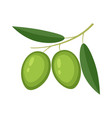 colorful olives with green leaves vector image vector image