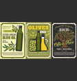 olive oil green fuits and tree vegetarian food vector image vector image