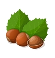 Hazelnuts with leafs isolated on white vector image