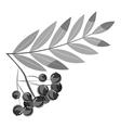 Rowan branch icon gray monochrome style vector image vector image
