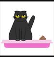 cat in litter box - cute black kitten in tray vector image vector image