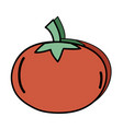 delicious fresh tomato organic vegetable vector image vector image