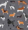 dog breeds seamless pattern vector image vector image