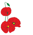 poppies on a white background vector image