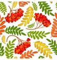 Rowan berry seamless texture Autumn vector image