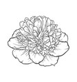 black and white peony isolated on background vector image vector image