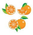collection of different oranges vector image vector image