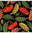Rowan seamless pattern Juicy ripe rowanberries vector image