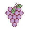 bunch grapes hello autumn design icon vector image