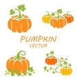 flat pumpkin icons set vector image