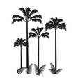 Four palms isolated on bright background vector image
