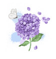hydrangea flower butterfly and splashes in vector image vector image