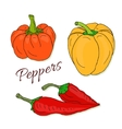 Set of hand drawn sketch peppers Chili and vector image vector image
