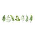 designer elements set green forest leaves herb vector image
