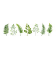 designer elements set of green forest leaves herb vector image