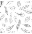 different black and white exotic feathers vector image vector image