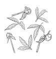 set beautiful black and white peony leaves and vector image vector image