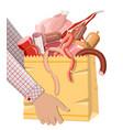 shopping supermarket bag full meat vector image vector image