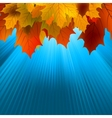 autumnal leafs of maple and sunlight eps 8 vector image vector image