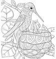 adult coloring bookpage a cute hummingbird near vector image