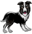 Collie vector image vector image