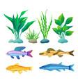 aquarium fish and decorative algae color poster vector image