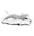 hand drawing of female sand lizard sitting on vector image