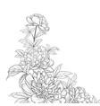 peonies ink background vector image vector image