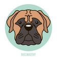 portrait bullmastiff vector image vector image