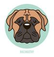 portrait of bullmastiff vector image