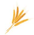 realistic isolated bundle wheat ears vector image