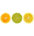 set of citrus fruit lime orange and lemon vector image vector image