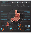 Stomach And Digestive Tract Anatomy System Medical vector image