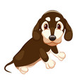 cute dachshund with big eyes sitting on a white vector image