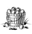 Retro bucket of tomatoes black and white vector image vector image