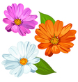 Set of Daisies vector image vector image