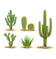 cactus plants set desert among sand and rocks vector image vector image