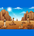 cartoon meerkats standing in the desert vector image vector image