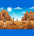 cartoon meerkats standing in the desert vector image