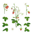 hand drawn strawberry set isolated on white vector image vector image