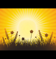poppy meadow with sunburst sky vector image vector image