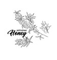 sea buckthorn branches hand drawn sketch vector image vector image